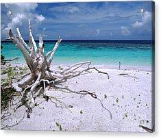 Maldives 11 Acrylic Print by Giorgio Darrigo