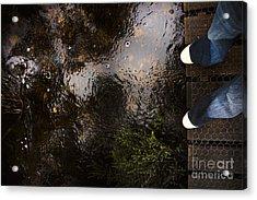 Man Standing On A Rainforest Boardwalk Acrylic Print by Jorgo Photography - Wall Art Gallery