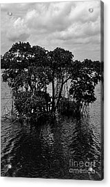 Mangrove Island Acrylic Print by Andres LaBrada