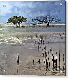 Mangrove Tree In Blurred Sea Acrylic Print by Dirk Ercken