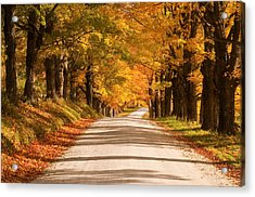 Maple Tree Canopy Acrylic Print
