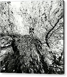 Maple Tree Inkblot Acrylic Print
