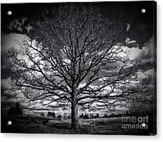 Marion Oaks Acrylic Print by September  Stone