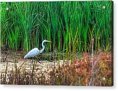 Marsh Hunter Acrylic Print by Scott Hansen