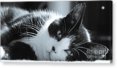 Max The Cat Acrylic Print by David Warrington