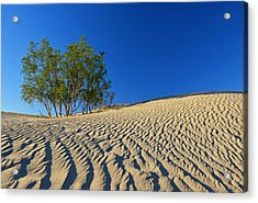 Acrylic Print featuring the photograph Mesquite Flat Sand Dunes - Death Valley by Dana Sohr