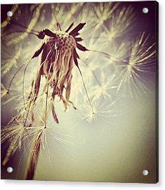 #mgmarts #dandelion #makeawish #wish Acrylic Print by Marianna Mills