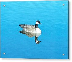 Acrylic Print featuring the photograph Mirror Goose by Kerri Mortenson
