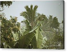 Monsoon Rains In Sri Lanka Acrylic Print