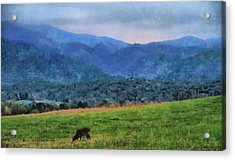Morning Deer In Cades Cove Acrylic Print by Dan Sproul