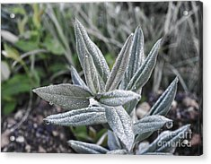 Acrylic Print featuring the photograph Morning Dew by Kate Avery