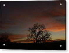 Morning Sky In Bosque Acrylic Print