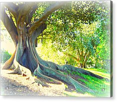 Morton Bay Fig Tree Acrylic Print by Leanne Seymour