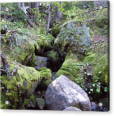 Moss Covered Creek Acrylic Print