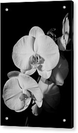 Acrylic Print featuring the photograph Moth Orchid Bw by Ron White