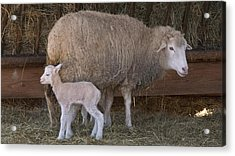 Mother And Child Acrylic Print by Arthur Warlick