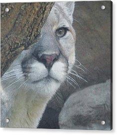 Mountain Lion Painterly Acrylic Print by Ernie Echols