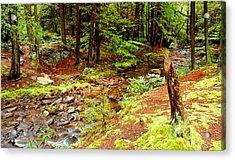 Mountain Stream With Hemlock Tree Stump Acrylic Print by A Gurmankin