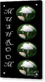 Mushroom Art Collection 1 By Saribelle Rodriguez Acrylic Print