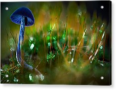 Mushroom Magic Acrylic Print by Dirk Ercken
