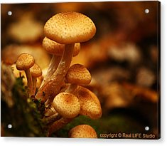 Mushrooms Of Fall Acrylic Print