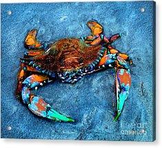 Crabby Blue Acrylic Print by Jeff McJunkin