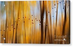 Mystic Forest Acrylic Print by Rima Biswas