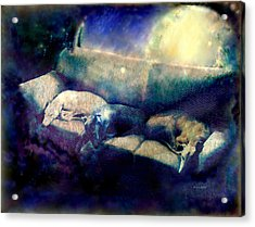 Nap Time Dreams Acrylic Print