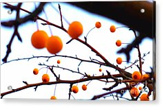 Natural Art Acrylic Print