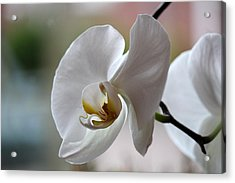 Acrylic Print featuring the photograph Natural Beauty by Silke Brubaker