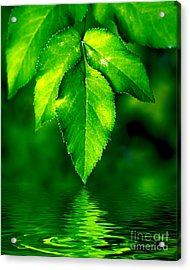 Natural Leaves Background Acrylic Print by Michal Bednarek