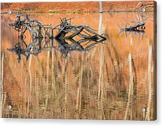 Nature Made Acrylic Print by Bill Wakeley