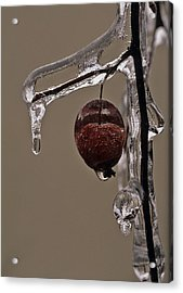 Nature's Candy Apple Acrylic Print by Tony Beck