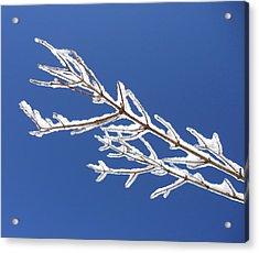 Winter's Icing Acrylic Print