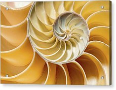 Nautilus Pompilius Acrylic Print by Natural History Museum, London