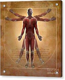 New Vitruvian Man Acrylic Print by Jim Dowdalls
