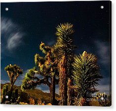 Night Desert Acrylic Print by Angela J Wright