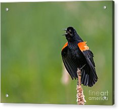 Acrylic Print featuring the photograph Noisemaker by Dale Nelson