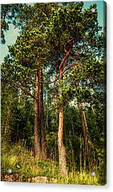Northern Forest  Acrylic Print by Jenny Rainbow