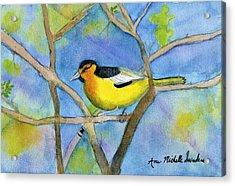 Northern Oriole Acrylic Print