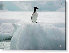 Norway Svalbard Spitsbergen Alkefjellet Acrylic Print by Inger Hogstrom