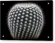 Notocactus Scopa Acrylic Print by Victor Mozqueda