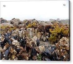 Nye Beach Acrylic Print by Roxanne Luckman