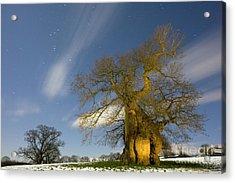 Oak Quercus Robur Acrylic Print by Bob Gibbons