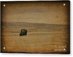 Western Themed South Dakota Bison  Acrylic Print