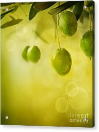 Olives Design Background Acrylic Print by Mythja  Photography