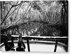 On Board An Airboat Ride Through A Mangrove Jungle In Everglades City Florida Everglades Acrylic Print by Joe Fox