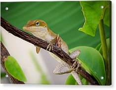 Acrylic Print featuring the photograph On Guard by TK Goforth