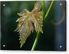 On My Own Acrylic Print by Fraida Gutovich