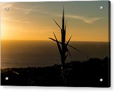 One At Sunset Acrylic Print